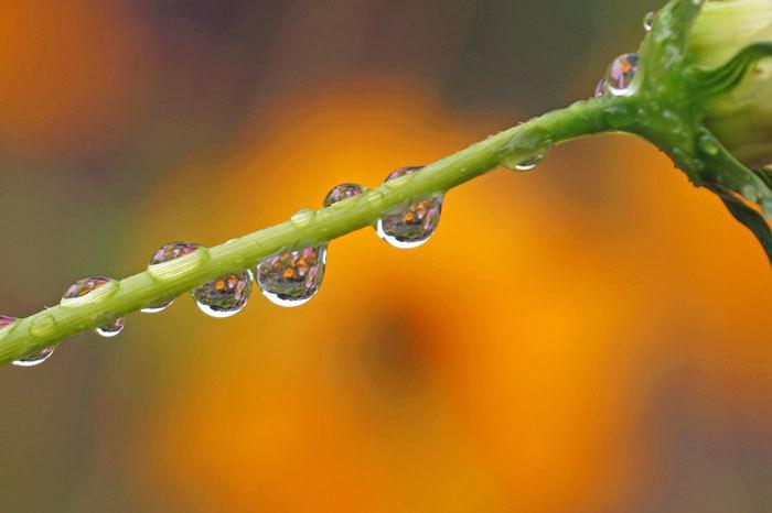 水滴・・2_d0162994_08150068.jpg