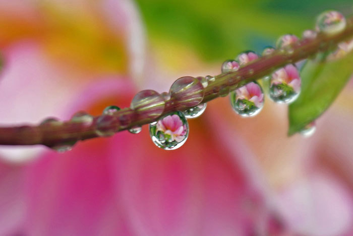 水滴・・2_d0162994_08151529.jpg