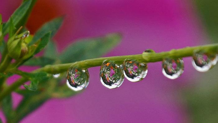 水滴・・2_d0162994_08162990.jpg