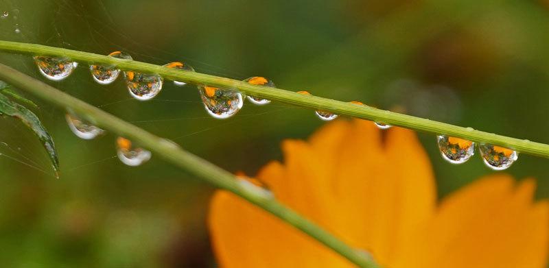水滴・・2_d0162994_08164884.jpg