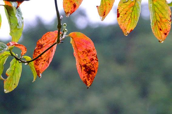 9月1日 秋が来た_b0145296_09494594.jpg