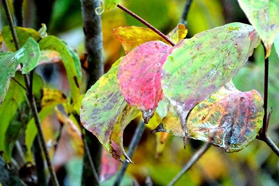9月1日 秋が来た_b0145296_17085570.jpg