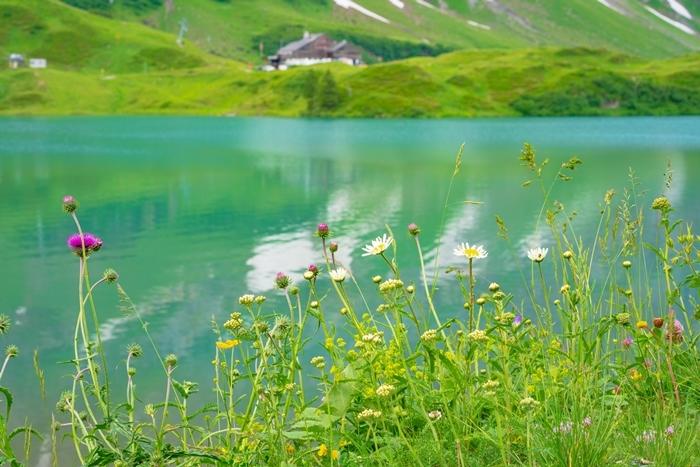 スイスの神秘的な美しい湖 トリュプゼー_b0145398_00052953.jpg