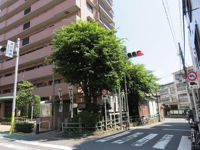 縁切榎 (新江戸百景めぐり㉘)_c0187004_18065714.jpg