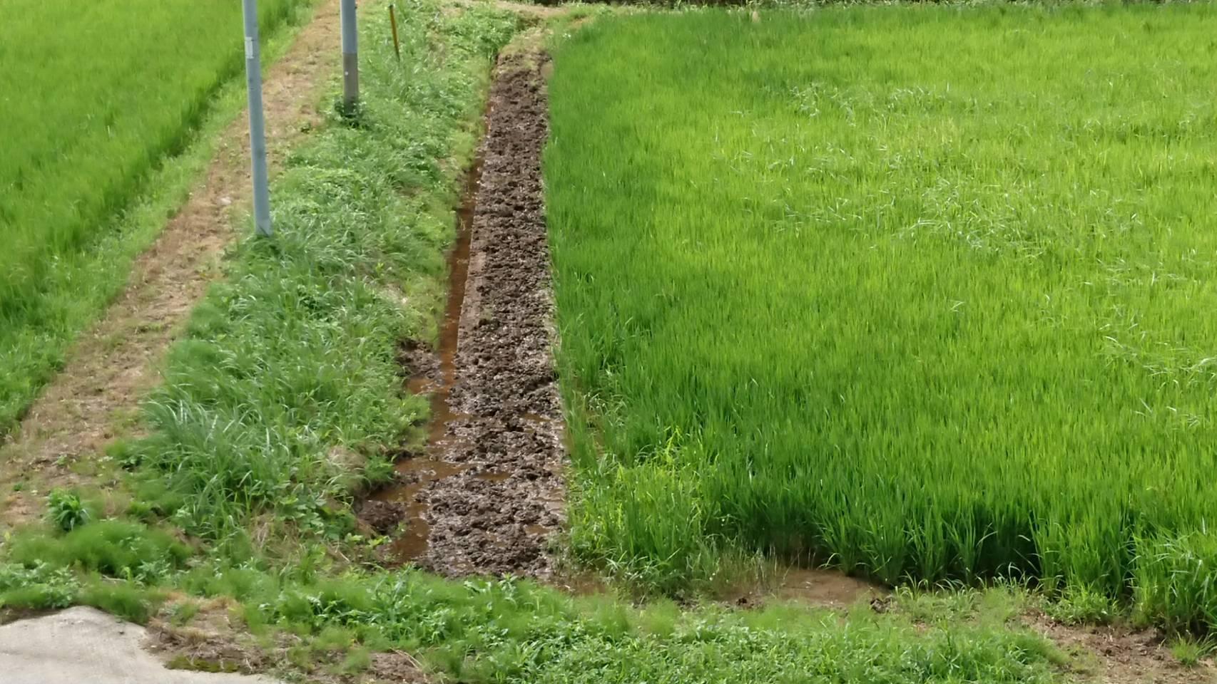 収穫の秋_b0281312_08441476.jpg