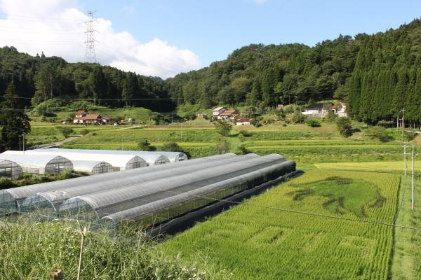収穫の秋_b0281312_09140408.jpg