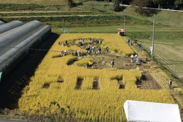 収穫の秋_b0281312_09165233.jpg