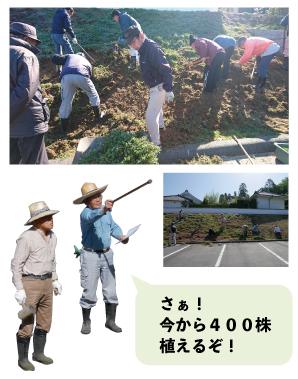 芝桜の草取りを行いました_e0314330_15200520.jpg