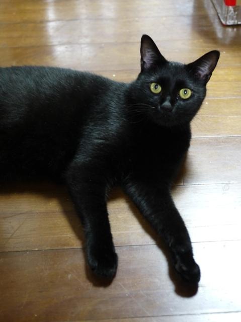 猫のお留守番 レオくん編。_a0143140_22053186.jpg
