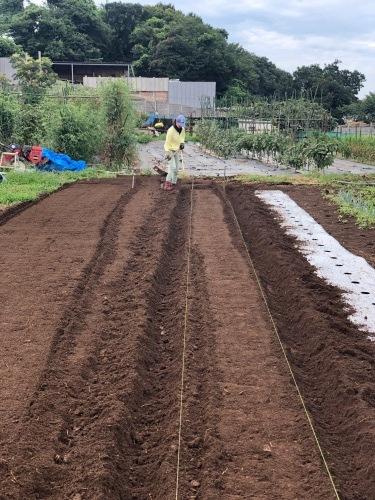 カーヴォロネーロ アスパラ菜の播種開始します_c0222448_12185535.jpg