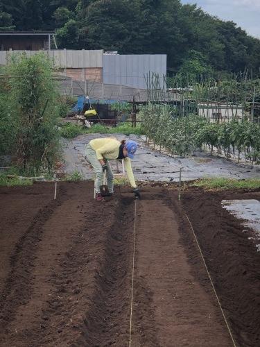 カーヴォロネーロ アスパラ菜の播種開始します_c0222448_12190872.jpg