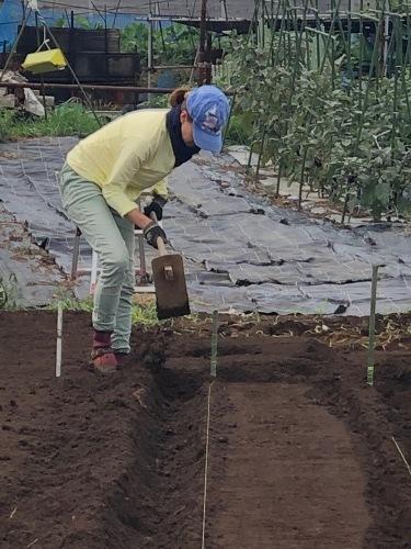 カーヴォロネーロ アスパラ菜の播種開始します_c0222448_12192084.jpg