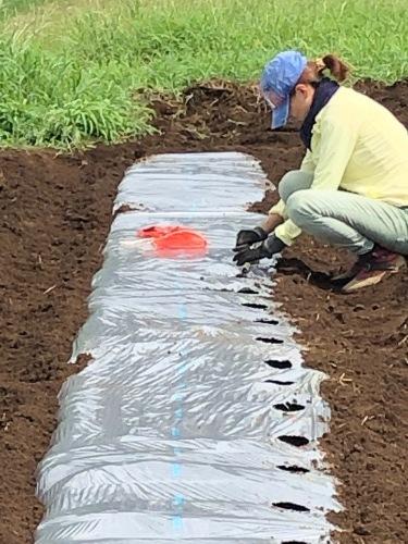 カーヴォロネーロ アスパラ菜の播種開始します_c0222448_12235863.jpg