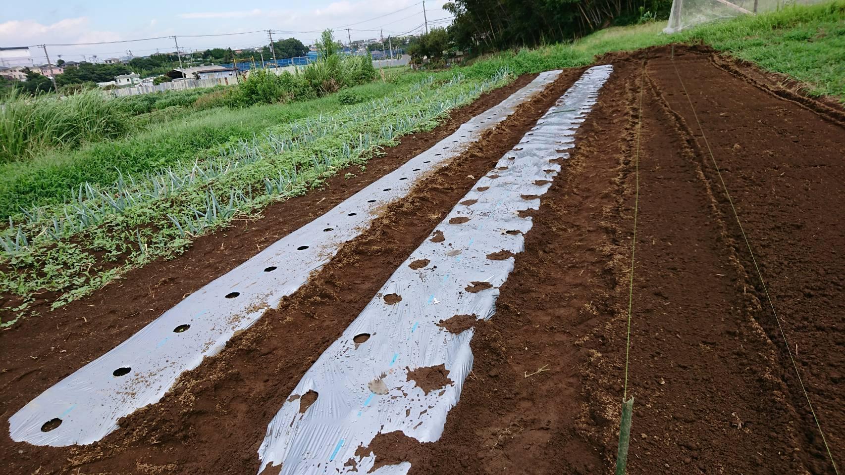 カーヴォロネーロ アスパラ菜の播種開始します_c0222448_15161884.jpg