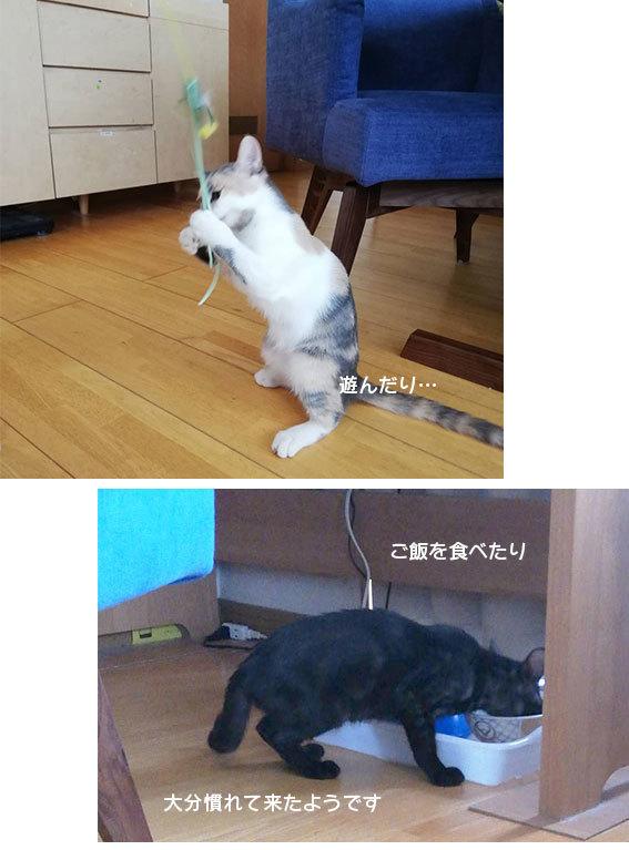 シジミとシフォン達のお届け&腕枕♬&フリマ品ありがとございます!!_d0071596_22391928.jpg