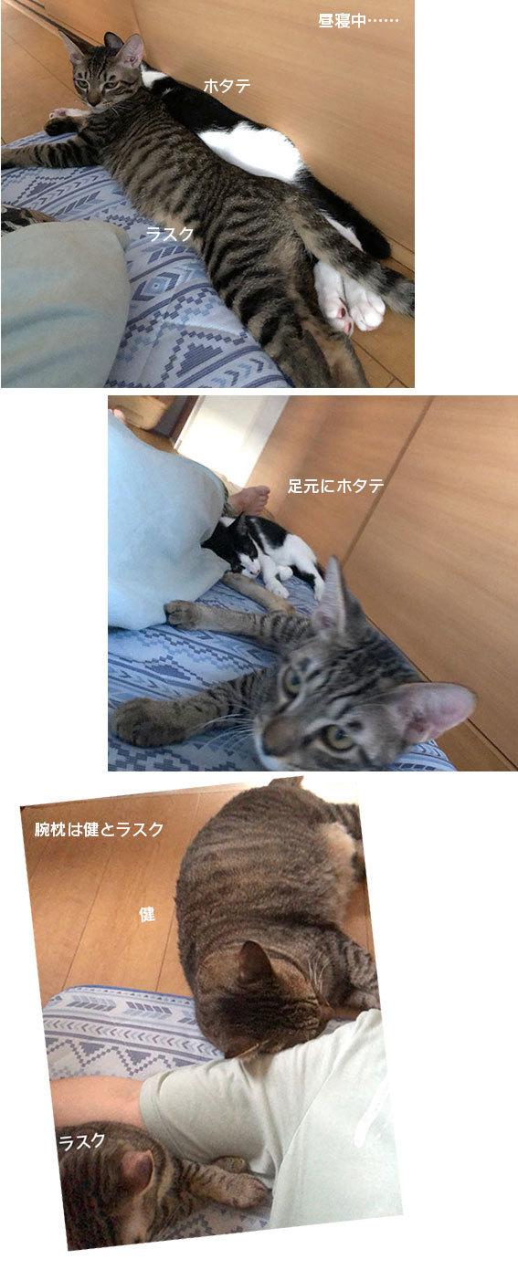 シジミとシフォン達のお届け&腕枕♬&フリマ品ありがとございます!!_d0071596_23135824.jpg