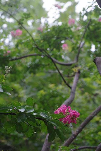 咲く。ー夏期保育・終ー_c0058507_17043491.jpg