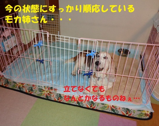f0121712_23514546.jpg