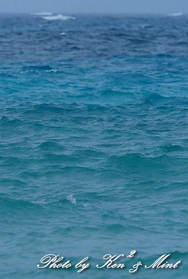 南の島3日目「ダイサギ」さん&「エリグロアジサシ」さん♪byミント_e0218518_21160776.jpg