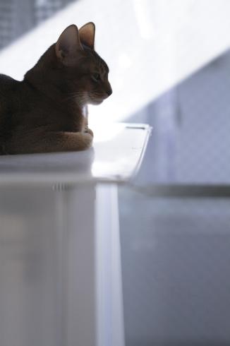 [猫的]朝日浴_e0090124_21535330.jpg