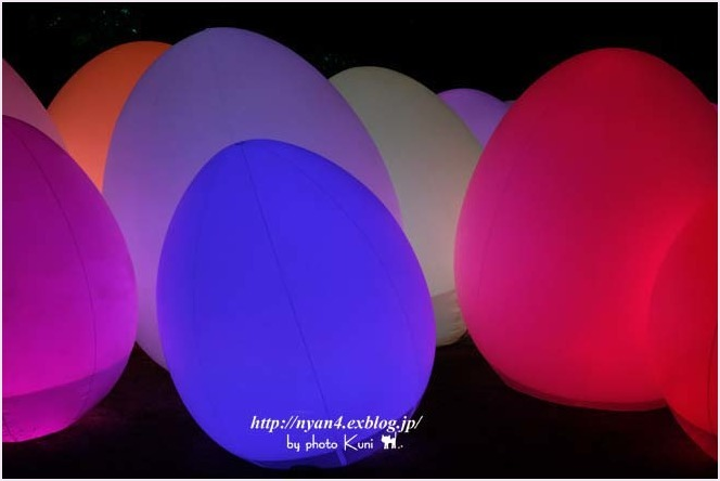 下鴨神社 糺の森(光の祭り)_f0166234_02513842.jpg