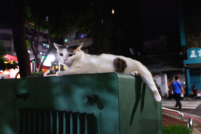 夜の散歩、徘徊?〜台北3_b0175635_22274310.jpg