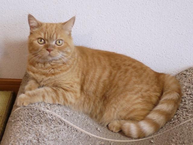 猫のお留守番 みかんちゃん編。_a0143140_22543424.jpg