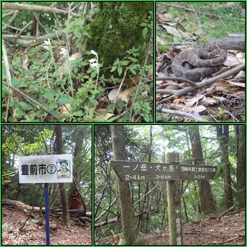 野峠から一ノ岳へ_e0164643_20271753.jpg