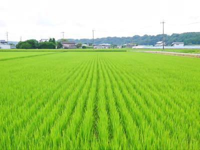 七城米 長尾農園 お米の花が咲きました 平成30年度の『七城米 長尾さんのこだわりのお米』残りわずか!_a0254656_17512458.jpg