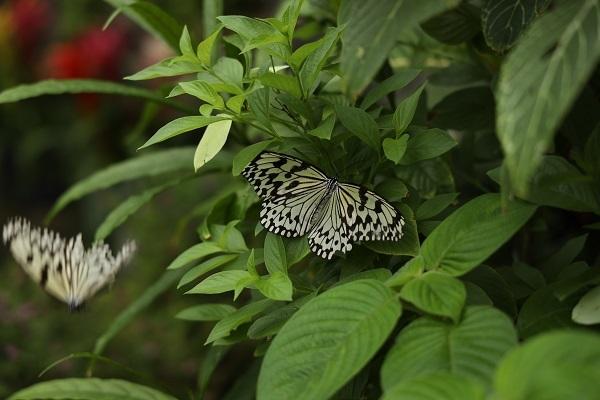 蝶を撮りにいきました*_b0328557_21272668.jpg