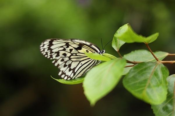 蝶を撮りにいきました*_b0328557_21274342.jpg