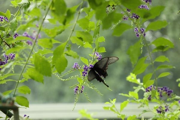 蝶を撮りにいきました*_b0328557_21280606.jpg