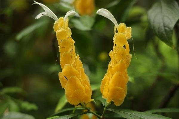 花に蝶* 温室はハイビスカスでいっぱいでした_b0328557_21560825.jpg