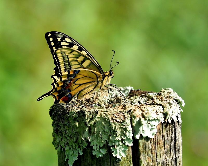 榛名湖畔でチョウなどを_c0305565_17351537.jpg