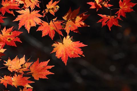 9月になりました。秋色ロードクロサイトのビーズ_d0303974_18494846.jpg