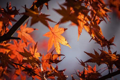 9月になりました。秋色ロードクロサイトのビーズ_d0303974_18500331.jpg