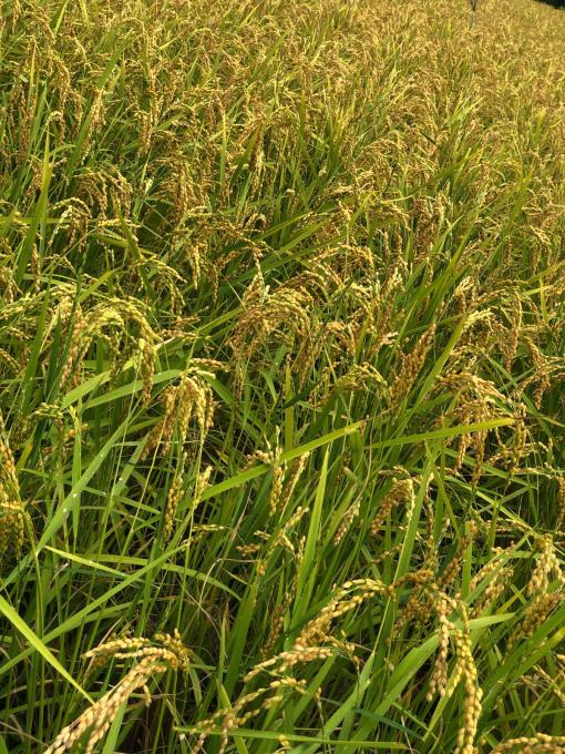 9月、収穫の季節_d0182179_08361300.jpg