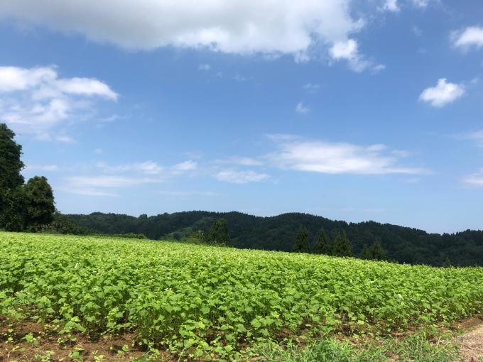 9月、収穫の季節_d0182179_08373303.jpg