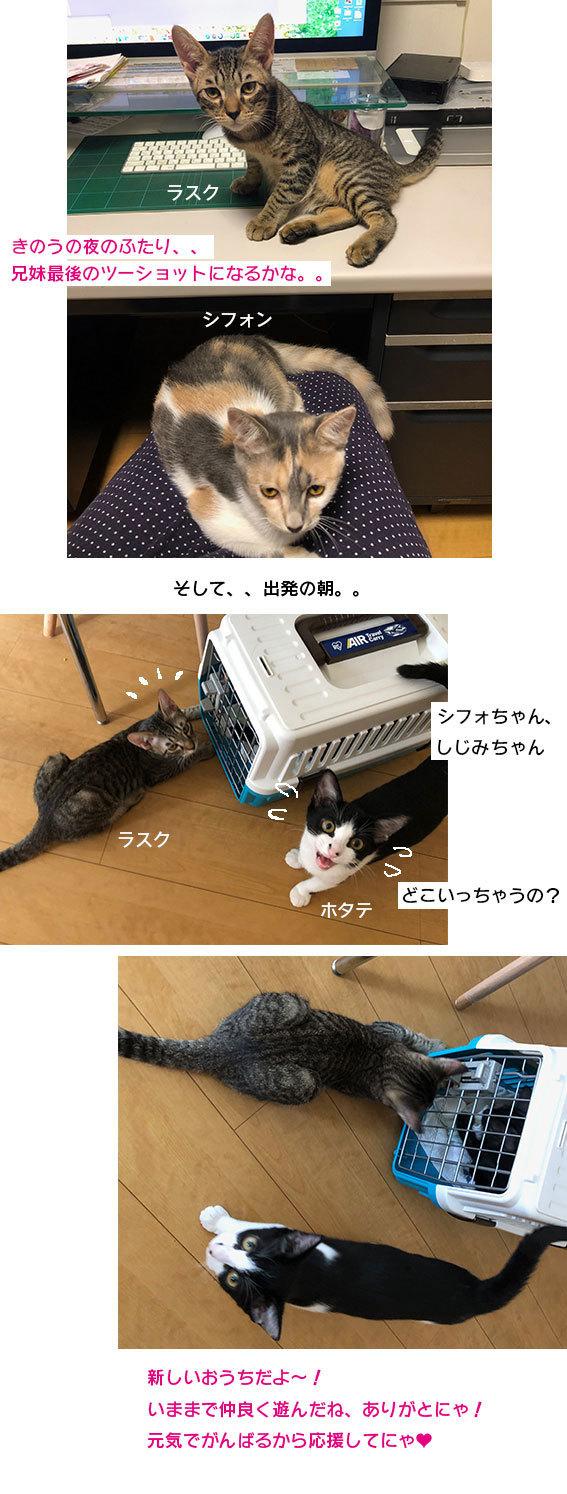 シジミとシフォン達のお届け&腕枕♬&フリマ品ありがとございます!!_d0071596_07184643.jpg