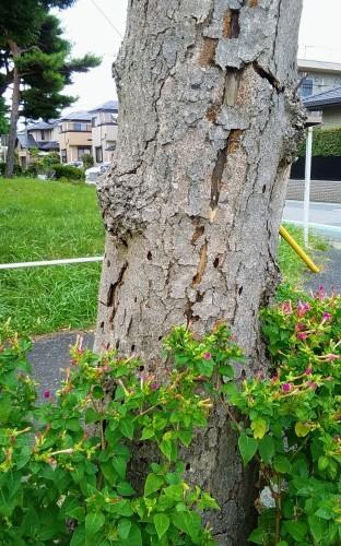 倒木の危険_a0162505_16294682.jpg