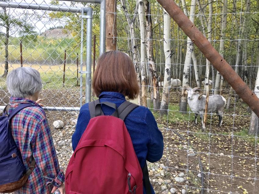 オーロラの次は野生動物を見に行こう!!_d0112928_13034888.jpg