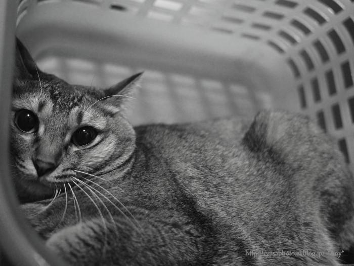 猫がいる暮らし - 23 -_e0347431_00134084.jpg