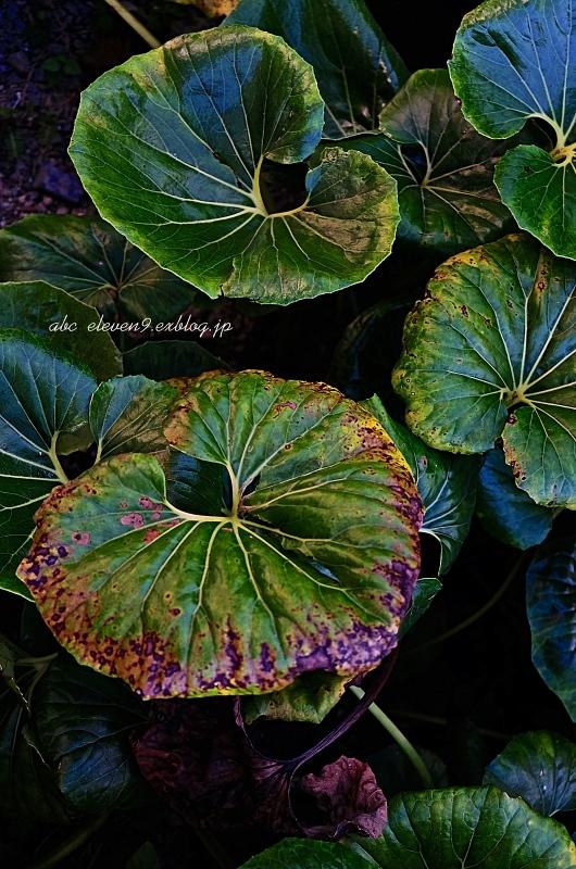 Leaf vein_f0315034_16303719.jpg