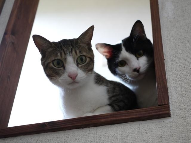 猫のお留守番 たんたんくんMaluくん編。_a0143140_23083151.jpg