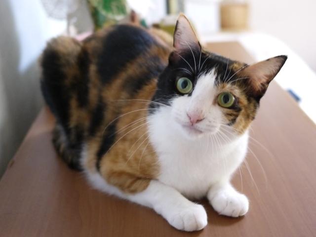 猫のお留守番 みーたんちゃん編。_a0143140_23131490.jpg