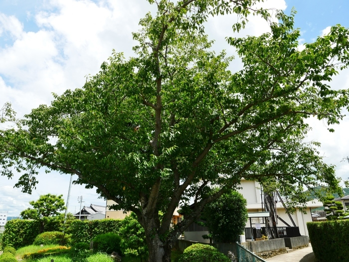 和歌山が生んだ偉人  2019-09-06 00:00  _b0093754_21064983.jpg