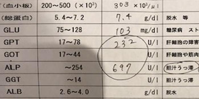 こんちゃん_a0300884_06511635.jpg