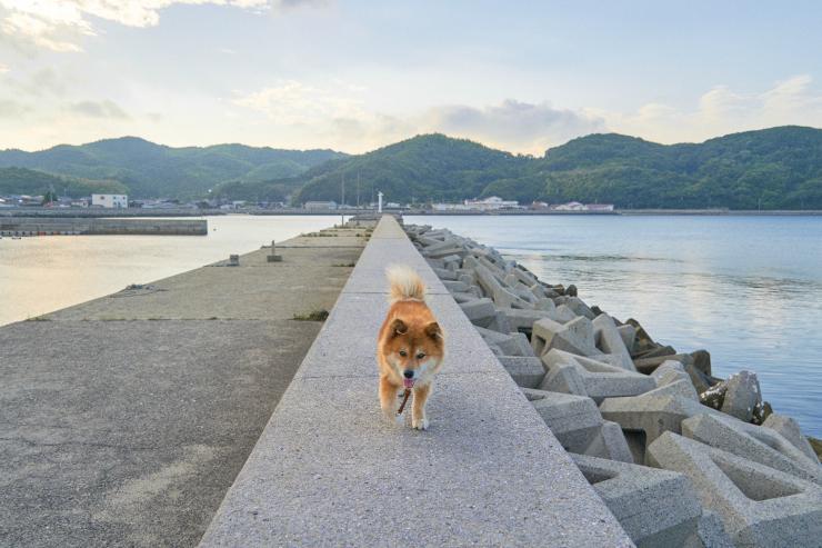 朝の散歩 waku_e0342136_19070665.jpg