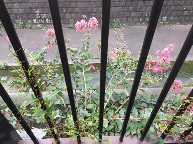 近所のかわいい猫ちゃん_c0076939_19115160.jpg