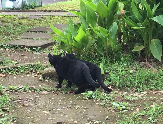 近所のかわいい猫ちゃん_c0076939_19132990.jpg